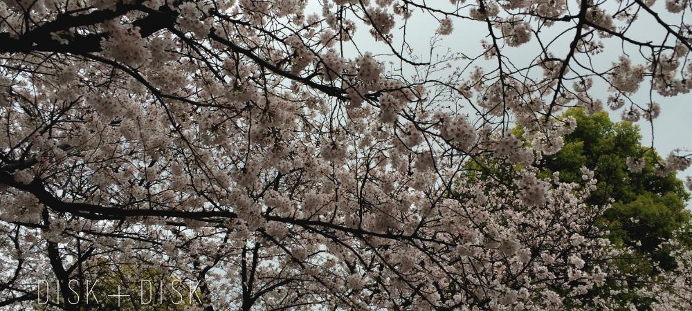 sakura-drops/disk
