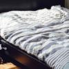 カビやダニの恐怖。特にベッドや寝具には気をつけよう。